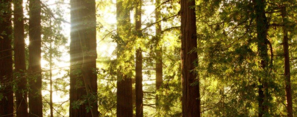 red woods environmental law